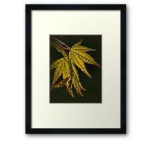 Maple Magic Framed Print