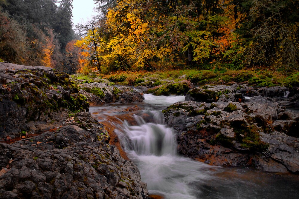 Nice Place To Rest ~ Calapooya River ~ by Charles & Patricia   Harkins ~ Picture Oregon