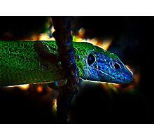 Green Fractal Dragon Photographic Print