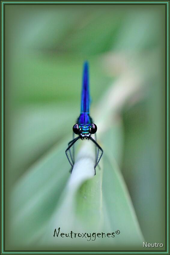 Blue dragonfly by Neutro