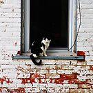 Window Cat by Jeffrey J. Miller