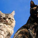 Kats by carlosporto