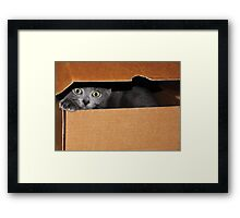 Caught on camera Framed Print