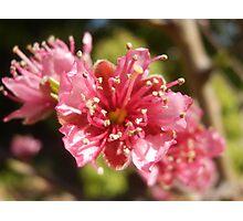 Nectarines ... eventually Photographic Print
