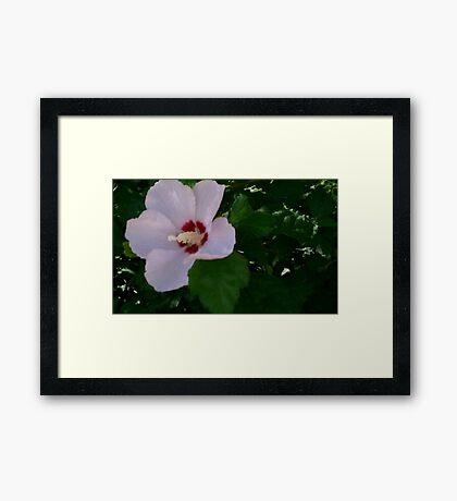 Flower Power 1 Framed Print