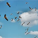 AND THEY WHERE THERE, A BLUE SKY FILLED WITH STORKS! by Magaret Meintjes