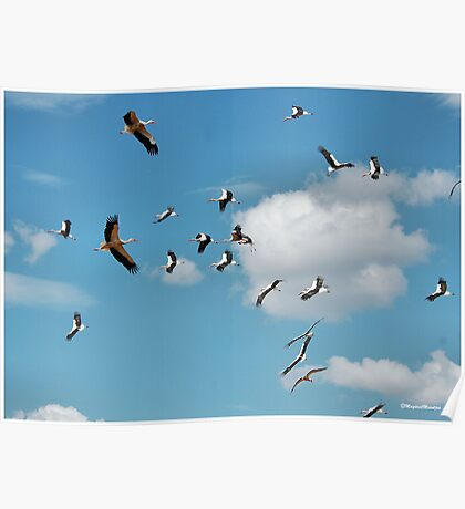 AND THEY WHERE THERE, A BLUE SKY FILLED WITH STORKS! Poster