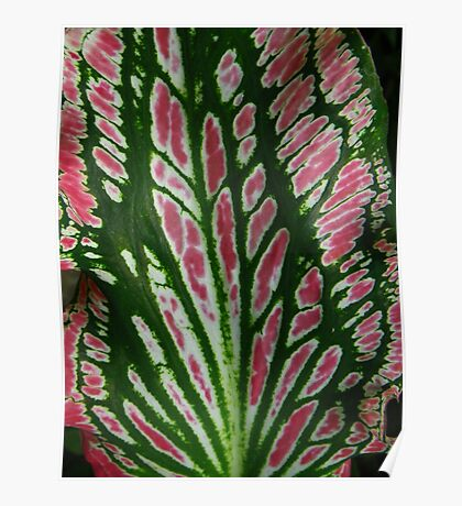Tropical Leaf in Red and Green Poster