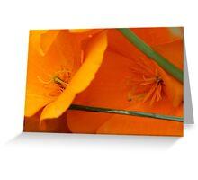 California Poppies Greeting Card