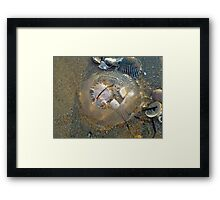 Stranded by the Tide - Clear Jellyfish Framed Print