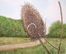 Teazle by Sharon Herbert