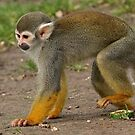 The Squirrel Monkey Stomp by Mark Hughes