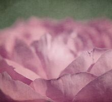antique pink by Aimelle