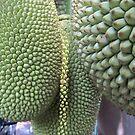 Tropical fruit like natures art by Bernhard Matejka