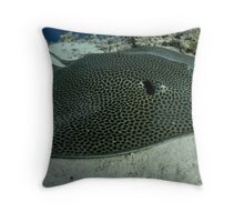 Honeycomb ray resting on Yolande plateau Throw Pillow