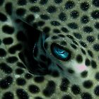 Honeycomb ray eye by shellfish