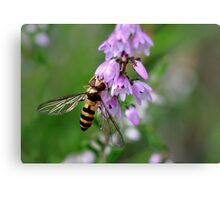 Hoverfly on Heather Canvas Print