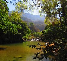 Sierra Madre - rivers and jungle - rios y selva by Bernhard Matejka