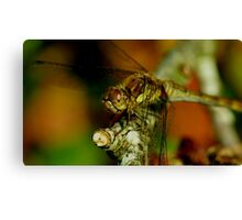 Female Darter Canvas Print