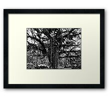 Cameroon Tree Framed Print