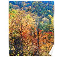TREES AUTUMN Poster