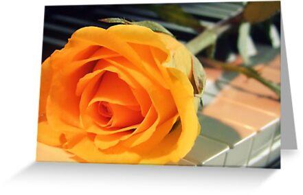 Yellow Rose by Kameron Walsh