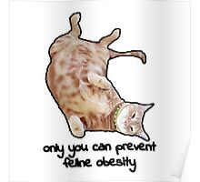 Tiggles the Obese Cat Poster