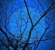 Moonlight Bird  (about a bird and a tree) (please see description) by Kanages Ramesh