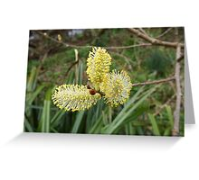 Pussy Willow Catkins Greeting Card