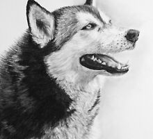 Chinook - Alaskan Malamute by Heather Ward