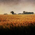 A Family Farm in Texas by Lisa Holmgreen