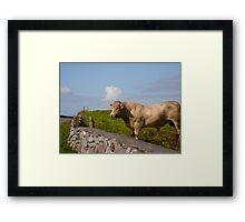 Bull - Ireland Framed Print