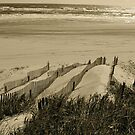 Dunes and Fences - Outer banks,Carolinas by Jenny Hambleton