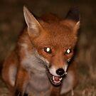 Urban Fox 4 by Dean Messenger