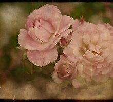 Summer Beauties by Lucinda Walter
