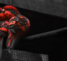 Love Birds by Jitesh Chauhan