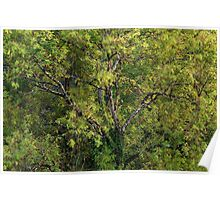 One tree with branches and leaves Poster