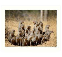 A Business of Mongoose Art Print