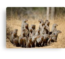 A Business of Mongoose Canvas Print