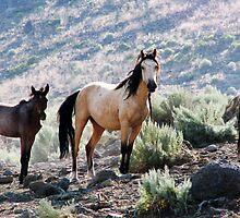 Mariah & Foal  by Violaleeblue
