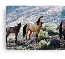 Mariah & Foal  Canvas Print