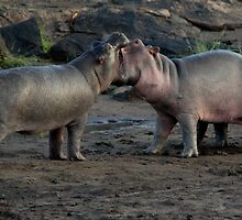 Africa Continues - Good Morning Hippos by Sally Haldane