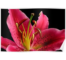 PINK TIGER LILY Poster