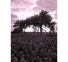 what dreams may come tree Photographic Print