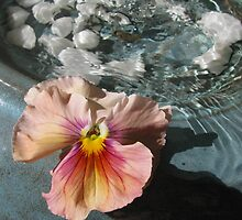 water and flower by Jeannine de Wet