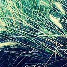 Wind by Shannon O'Brien