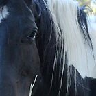 Beautiful Black n White Tobiano Paint by Debra Thomas