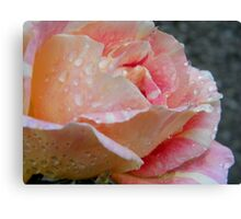 Shades of peach Canvas Print