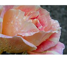Shades of peach Photographic Print