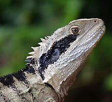 Wild Eastern Water Dragon by Samantha  Goode